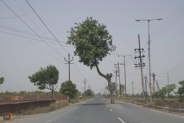 arbre  au millieux de la route