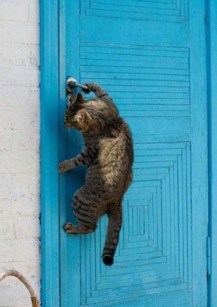 Un chat qui ouvre la porte for Porte qui s ouvre dessin